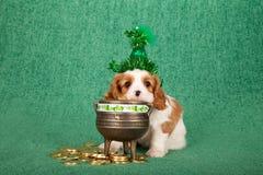 El perrito arrogante de rey Charles Spaniel con la cabeza verde de la ejecución del sombrero de St Patrick en mina de oro acuña e Imágenes de archivo libres de regalías