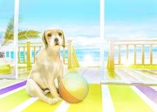 El perrito con la bola en la alfombra en el fondo del s Fotografía de archivo