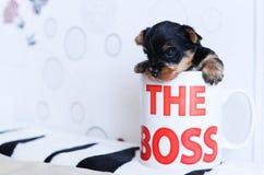 El perrito consiguió en una taza Imágenes de archivo libres de regalías