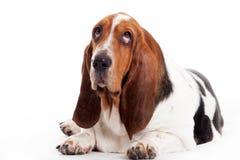 El perrito de silencio coloca Fotografía de archivo