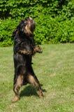 El perrito del baile fotografía de archivo