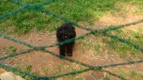 El perrito del peluche es impaciente ser tratado fotos de archivo libres de regalías