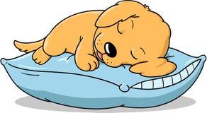 El perrito el dormir Imagen de archivo libre de regalías
