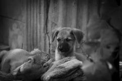 El perrito está mintiendo en las mantas suaves en la yarda debajo del sol fotografía de archivo