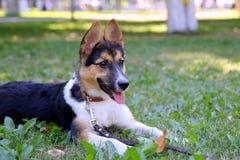 El perrito está mintiendo en una hierba en un parque Fotografía de archivo