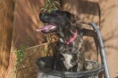 El perrito feliz que toma un baño en allí riega el cuenco Fotografía de archivo libre de regalías