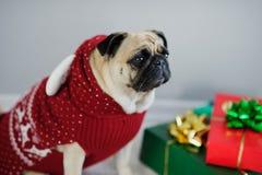 El perrito graciosamente del barro amasado de la raza se viste por un día de fiesta en traje del reno Foto de archivo