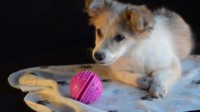 El perrito jugado con la bola, consiguió distraído y las miradas alrededor metrajes