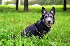 El perrito lanudo se está sentando en una hierba en un parque Fotografía de archivo