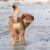 El perrito lindo de Elo mira detrás fotos de archivo libres de regalías