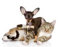 El perrito miente en un cat.looking rayado en la cámara. Imagenes de archivo