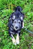 El perrito peludo está mintiendo en una hierba en un parque Imágenes de archivo libres de regalías