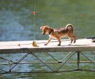 El perrito resuelve pescados Imagen de archivo