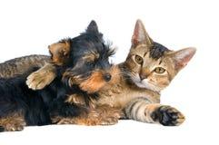 El perrito y el gatito imagenes de archivo