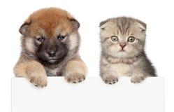 El perrito y el gatito muestran las patas sobre la bandera blanca Imagenes de archivo