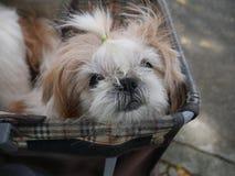El perro fotos de archivo
