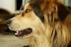 El perro Fotos de archivo libres de regalías