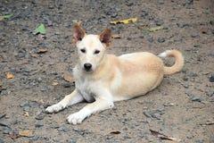 El perro Imagen de archivo libre de regalías