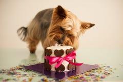 El perro adentro come una pequeña torta de cumpleaños Imagenes de archivo