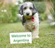 El perro adoptado blanco y negro lindo Fotografía de archivo
