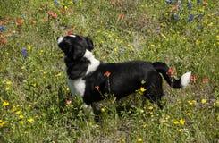 El perro ama las flores foto de archivo