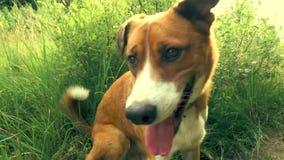 El perro anaranjado se sienta