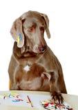 El perro aprende pintar Fotografía de archivo libre de regalías