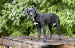 El perro basset lindo de Terrier del beagle mezcló el perro de perrito de la raza al aire libre en el correo Imagenes de archivo
