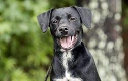El perro basset lindo de Terrier del beagle mezcló el perro de perrito de la raza al aire libre en el correo Fotos de archivo libres de regalías