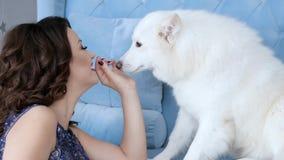 El perro blanco lame las manos cerca para arriba, mujer joven con maquillaje elegante en el sofá acogedor con el animal doméstico almacen de metraje de vídeo