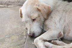 El perro blanco sin hogar en la calle secundaria Imágenes de archivo libres de regalías