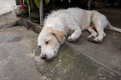 El perro blanco sin hogar en la calle secundaria Foto de archivo libre de regalías