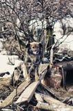 El perro bonito tranquilo se está sentando en los tableros Fotografía de archivo libre de regalías