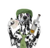 El perro borracho está jugando y está fumando Imágenes de archivo libres de regalías
