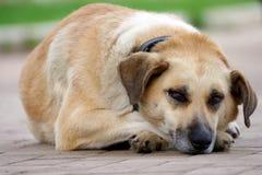 El perro cansado está descansando sobre el pavimento Imagenes de archivo