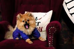 ¡El perro cansado y bostezos! Imagen de archivo