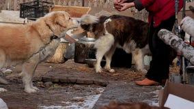 El perro come con sus manos del dueño El retrato de pocos perros mereció la comida almacen de metraje de vídeo