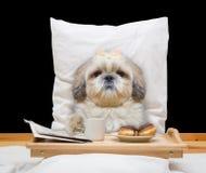 El perro come en cama y bebida Fotos de archivo