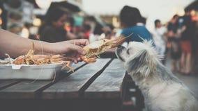El perro come a un dueño frito gamba del animal doméstico de la alimentación de la sal del camarón Fotografía de archivo libre de regalías