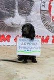 El perro con la tabla traducida del ` ruso nuestras vidas es más costoso que un ` del balón de fútbol en la acción internacional  Imagenes de archivo