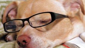 El perro con los vidrios Concepto de la educaci?n almacen de metraje de vídeo