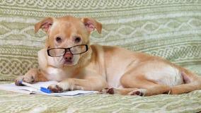 El perro con los vidrios Concepto de la educaci?n metrajes