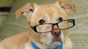 El perro con los vidrios Concepto de la educaci?n almacen de video