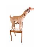 El perro consigue un convite. fotografía de archivo libre de regalías