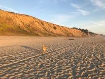 El perro corre en la playa vacía imagenes de archivo