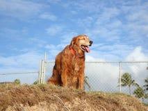 El perro cuelga hacia fuera encima de peñasco de la arena Foto de archivo