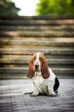 El perro de afloramiento mira la cámara Imagen de archivo