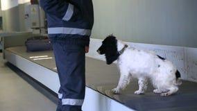 El perro de aguas del perro policía da la pata almacen de video