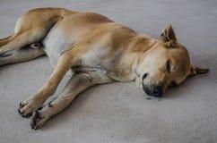 El perro de Brown era sueño en la tierra Foto de archivo
