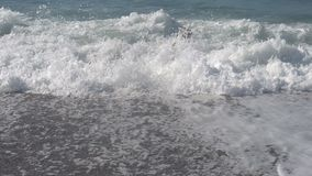 El perro de Brown Labrador se juega en la orilla de mar almacen de metraje de vídeo